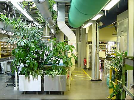 vertikale grünwand Topfpflanzen in Harmonie mit dem Interieur Möbel Stil Farben Büro