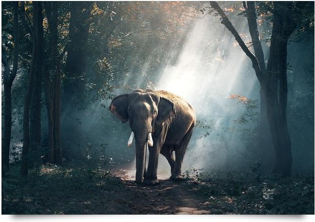 pxb-elefant