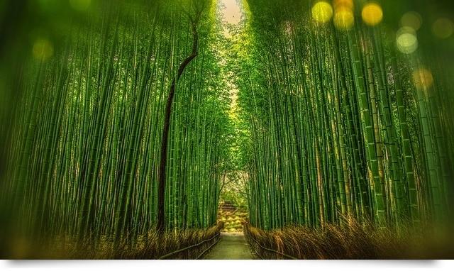 50 Zitate Spruche Die Aufbauen Und Mut Machen Zeitbluten