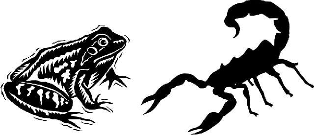 pxb-skorpion-frosch