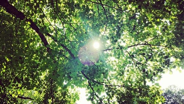 Unter_Baum